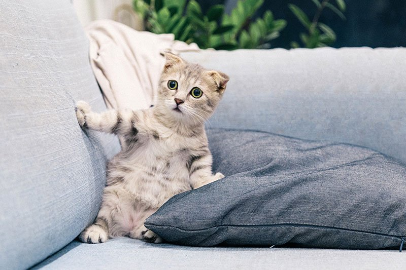 Grey and white kitten looking scared on a sofa