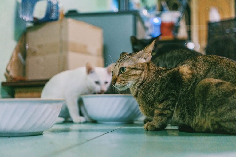 What Is The Best Cat Food For Older Cats