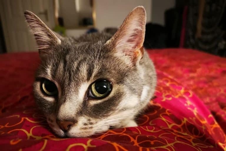 Best Cat Food For Sensitive Stomach 2021