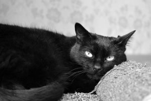 Best Litter Box For Male Cats