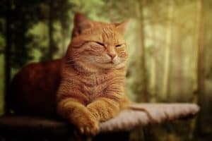 Chronic Kidney Disease In Cats