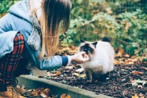 Best Treats For Cats With Kidney Disease