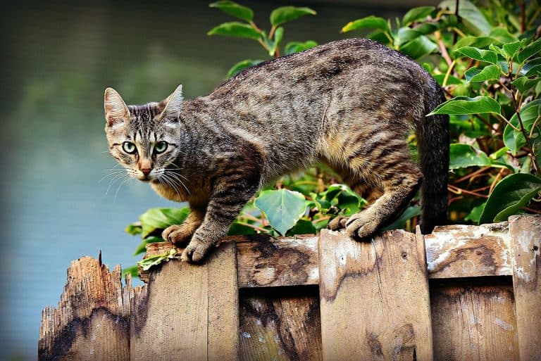 Best Supplements For Cats With Kidney Disease
