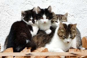 How Many Litter Boxes For 4 Cats