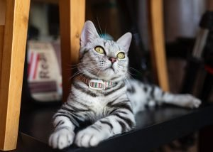 Best Cat Litter For Small Appartment