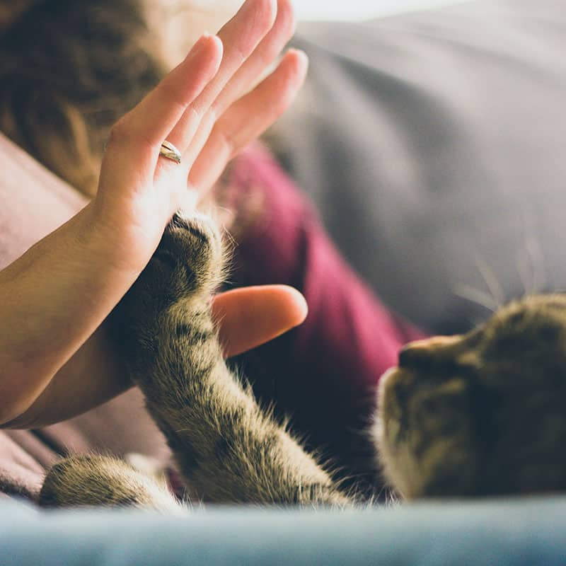 A cat and a human giving each other a high five