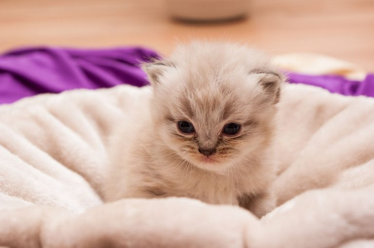Best Litter Box For Small Kittens